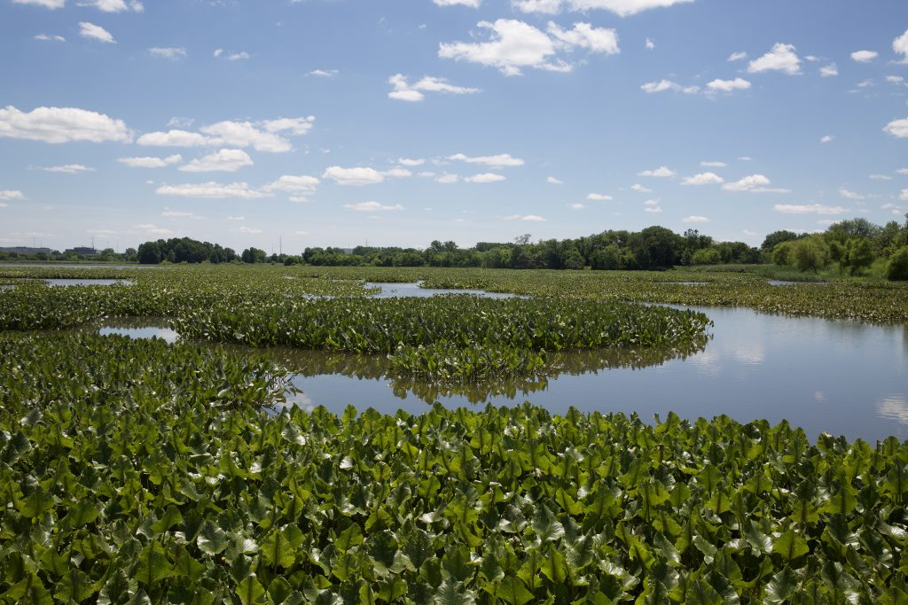 2019: The John Heinz Wildlife Refuge protects the remaining 200 acres of Eastwick's marshland.
