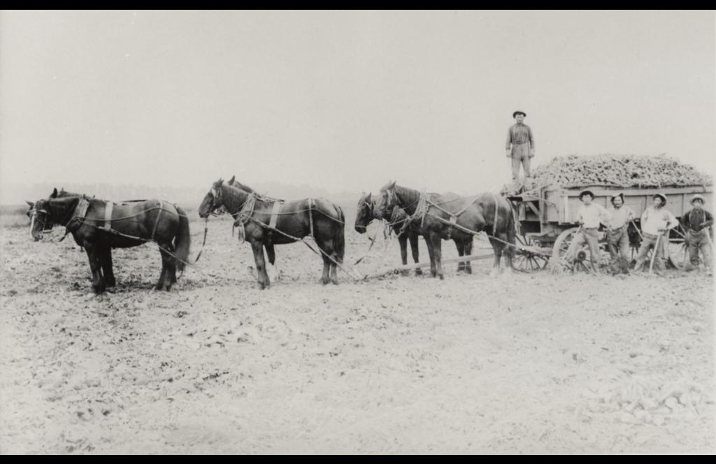1909: Hermann Neumann and workers on Neumann Farm in Oxnard, CA.