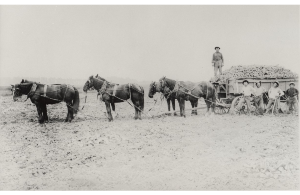 1909: Hermann Neumann and workers on Neumann Farm in Oxnard, CA.