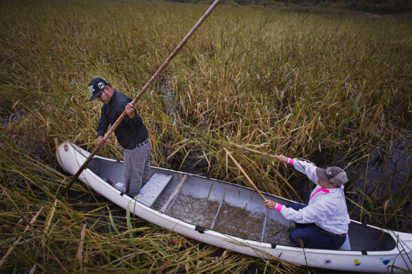 2017: Ojibwe wild rice harvesting is threatened by pollution, climate change, and settler colonial practices