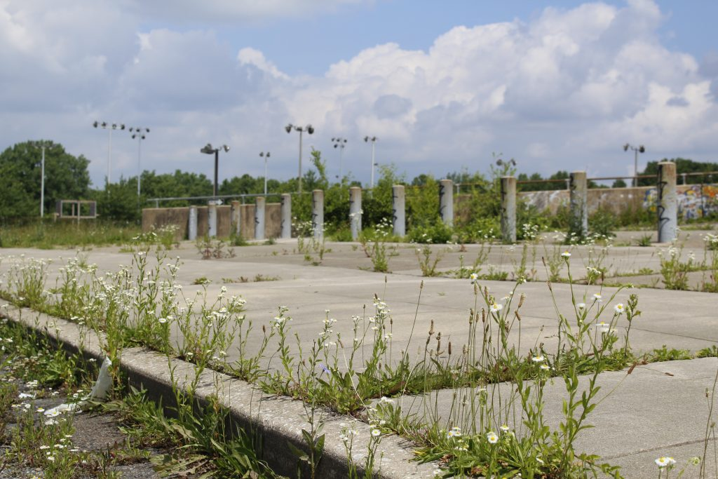 Weeds and wildflowers reclaiming grounds of former Pepper Middle School.